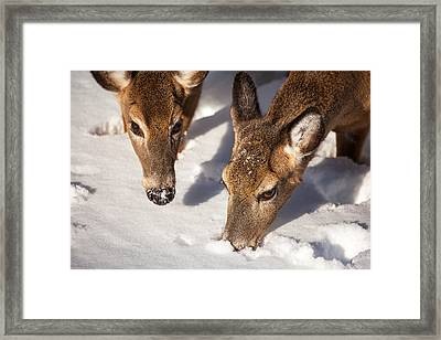 Two Searching Framed Print by Karol Livote