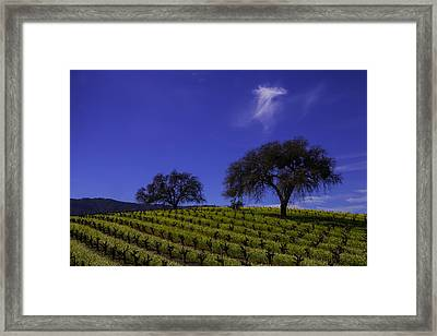 Two Trees In Vineyard Framed Print by Garry Gay