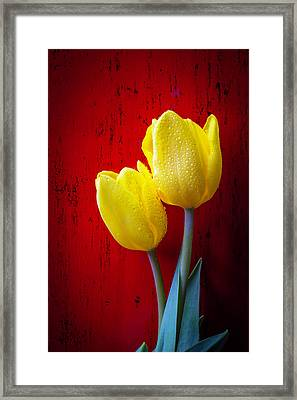 Two Tulips Against Red Wall Framed Print by Garry Gay
