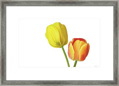 Two Tulips Framed Print by Rita Magos