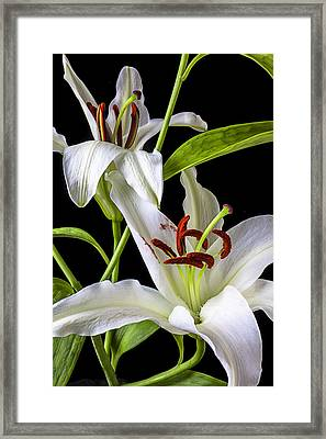 Two Wonderful Lilies  Framed Print by Garry Gay