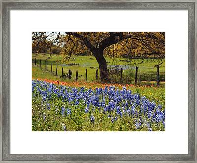 Tx Tradition, Bluebonnets Framed Print by Lisa Spencer