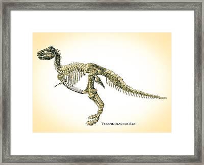 Tyrannosaurus Rex Skeleton Framed Print by Bob Orsillo