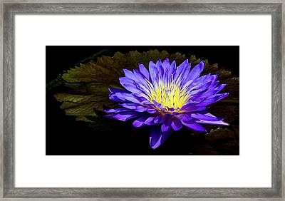 Ultra Violet Tropical Waterlily Framed Print by Julie Palencia