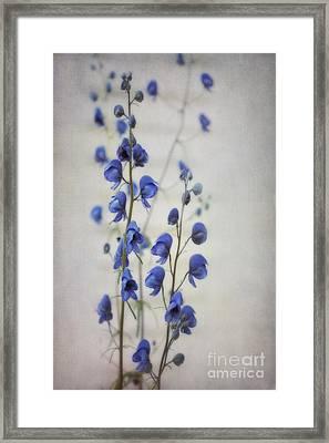 Ultramarine  Framed Print by Priska Wettstein