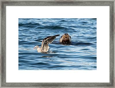Unaware Framed Print by Mike Dawson