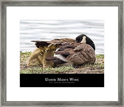 Under Mom's Wing Framed Print by Bill Kesler