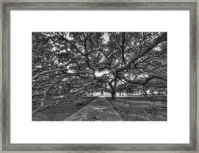 Under The Century Tree - Black And White Framed Print by David Morefield
