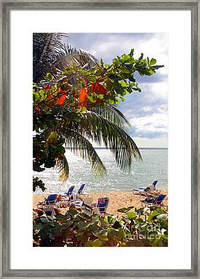 Under The Palms In Puerto Rico Framed Print by Madeline Ellis