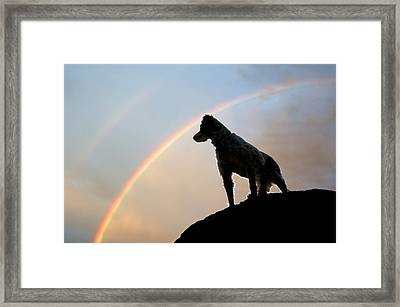 Under A  Rainbow Framed Print by Flying Z Photography By Zayne Diamond