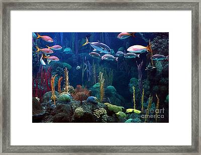 Under The Sea 3 Framed Print by Randy Matthews