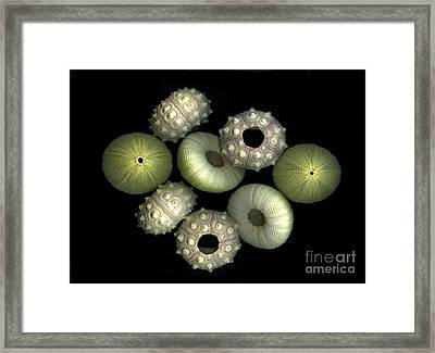 Under The Sea Framed Print by Christian Slanec