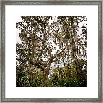 Under The Shade Of A Georgia Live Oak Framed Print by Chris Bordeleau