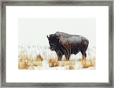 Under The Snow Framed Print by Joan Escala