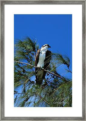 Under Watchful Eyes Framed Print by Christiane Schulze Art And Photography