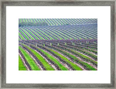 Undulating Vineyard Rows Framed Print by Jeff Lowe