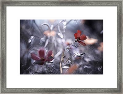 Une Fleur, Une Histoire Framed Print by Fabien Bravin