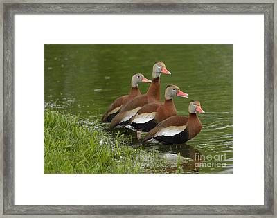 Unexpected Visitors Framed Print by Randy Bodkins