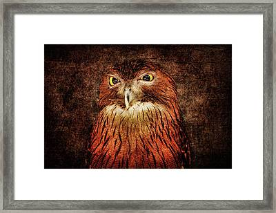 Unimpressed Framed Print by Andrew Paranavitana