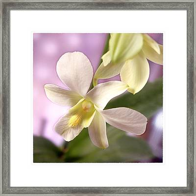 Unique White Orchid Framed Print by Mike McGlothlen