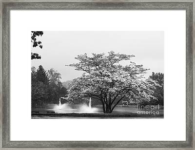 University Of Connecticut Landscape Framed Print by University Icons