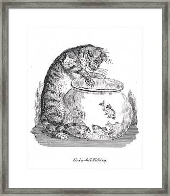 Unlawful Fishing Cat Paws At Goldfish Framed Print by Wellcome Images