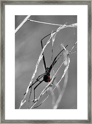 Unmistakable  Framed Print by JC Findley