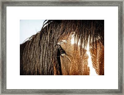 Untamed Framed Print by Lincoln Rogers