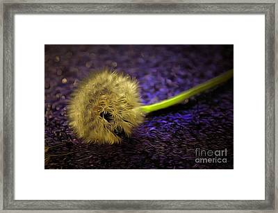 Untold Wishes Framed Print by Krissy Katsimbras