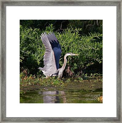Up And Out Framed Print by Robert Pearson