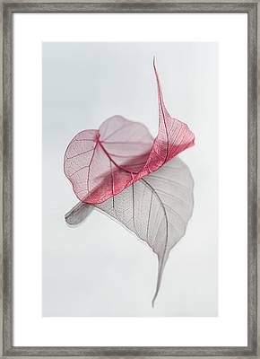 Uplifted Framed Print by Maggie Terlecki