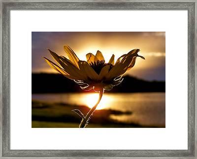 Uplifting Framed Print by Karen M Scovill