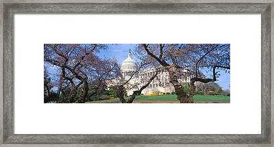 Us Capitol Building And Cherry Framed Print by Panoramic Images