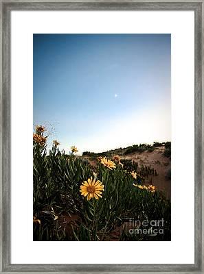 Utah Coral Sand Dune Flowers Framed Print by Ryan Kelly