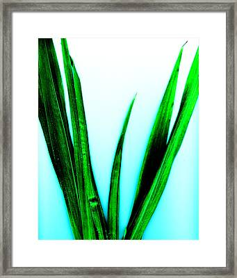 Vanquish Framed Print by Slade Roberts