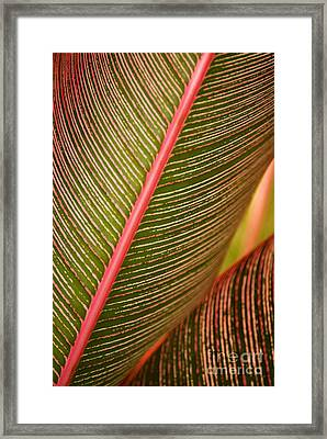 Variegated Ti-leaf 1 Framed Print by Ron Dahlquist - Printscapes