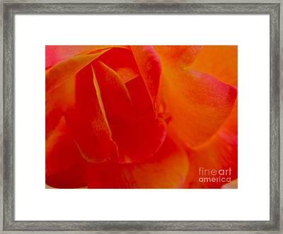 Velvet Touch Framed Print by PJ  Cloud