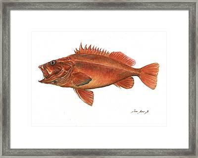 Vermilion Rockfish Framed Print by Juan Bosco