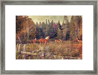 Vermont Horse Farm In Autumn Framed Print by Joann Vitali