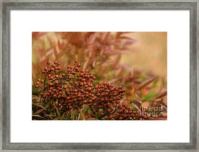 Very Berry Framed Print by Nick  Boren
