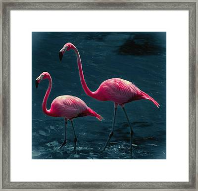 Very Pink Flamingos Framed Print by DigiArt Diaries by Vicky B Fuller