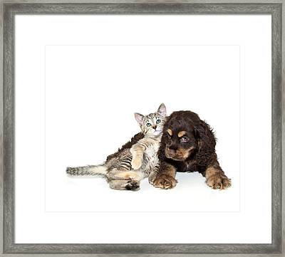 Very Sweet Kitten Lying On Puppy Framed Print by StockImage