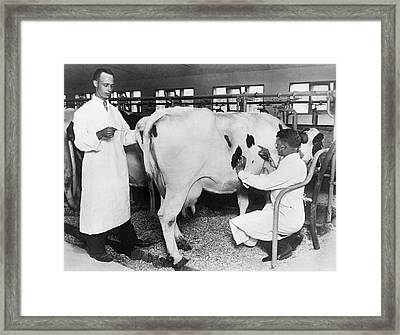 Vets Give Cow A Physical Framed Print by Underwood Archives