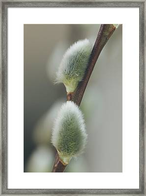 Videung Framed Print by Cindy Grundsten