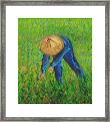 Vietnamese Rice Planter  Framed Print by Lore Rossi