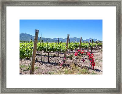 View From The Winery With The Roses, Casablanca, Chile Framed Print by Anna Soelberg