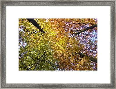 View To The Top Of Beech Trees Framed Print by Heiko Koehrer-Wagner