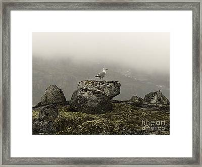 Vigilance In Tormented Valley Framed Print by TAPS Photography