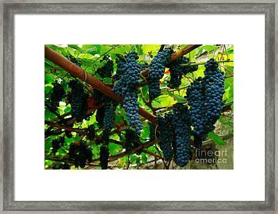 Vines Framed Print by Gaspar Avila
