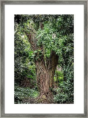 Vines Framed Print by Kelley King